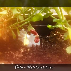 Foto - Weichzeichner